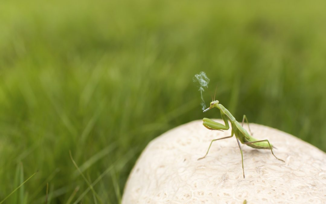 Are you an Ant or a Grasshopper?